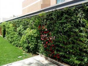 دیوار سبز   Green Wall