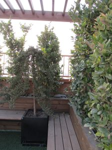 roofgarden-tehran-sheykh bahaei (10)