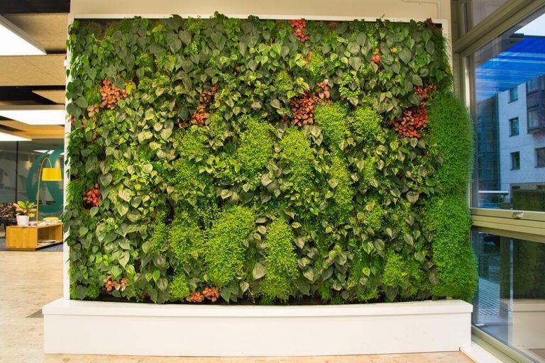 پیشینه انواع دیوار سبز